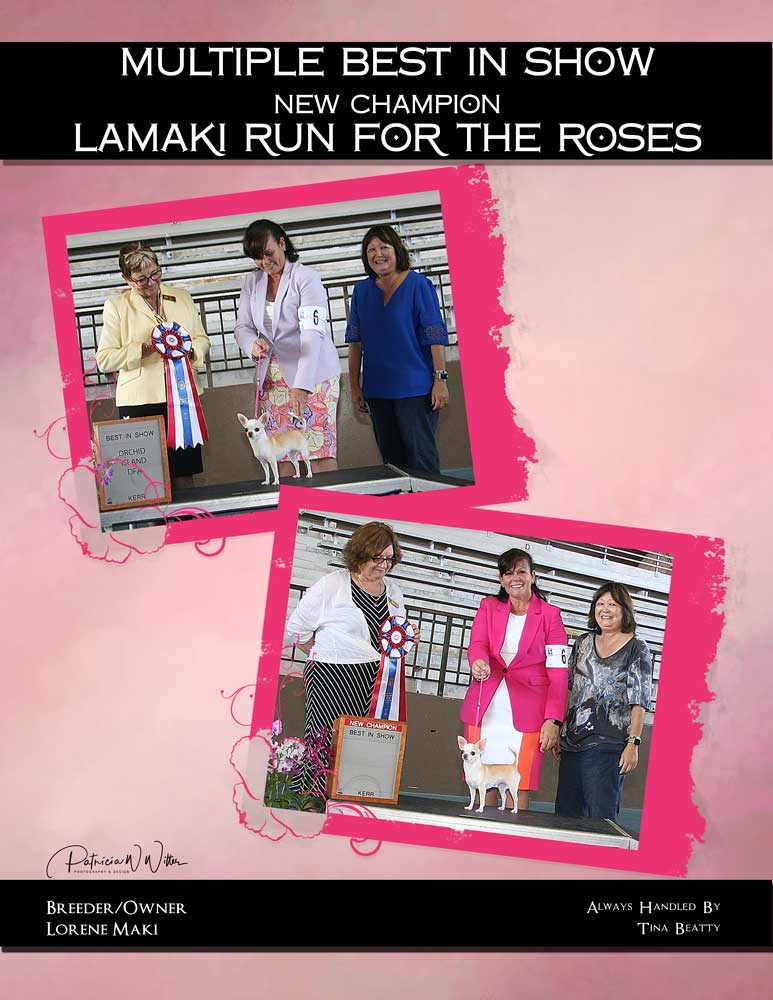 BIS CH Lamaki Run For the Roses